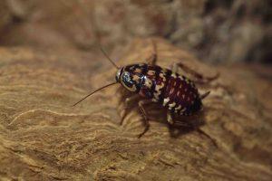 roach exterminator broken arrow
