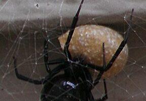 Spider Control in Broken Arrow