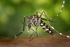 mosquito control broken arrow ok