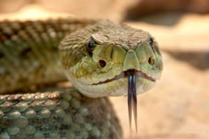 broken arrow snake removal professional