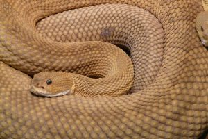 broken arrow snake removal company