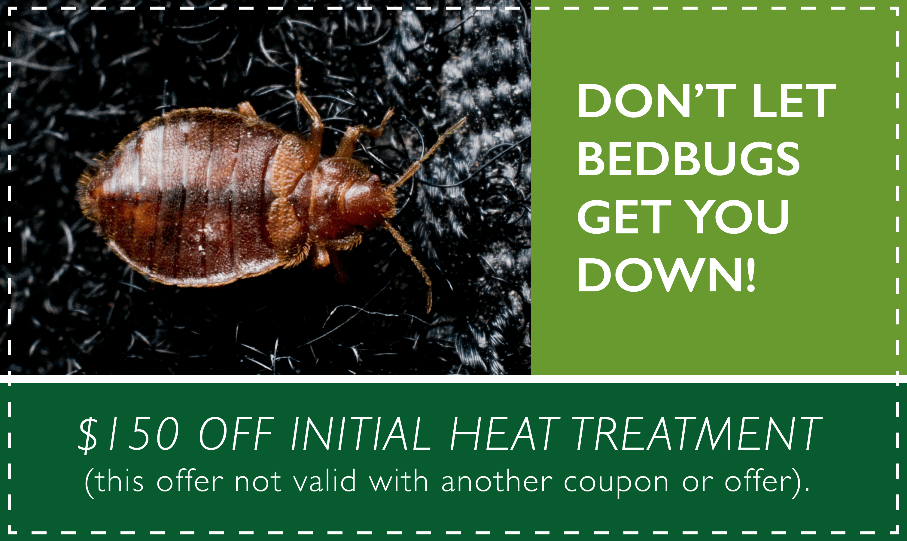 Bed Bug Heat Treatment Service