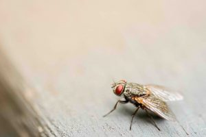 broken arrow fly removal