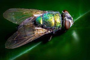 broken arrow fly nuisance