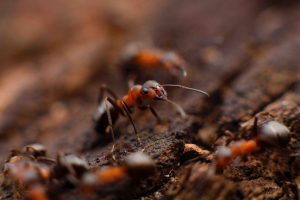 ant extermination broken arrow