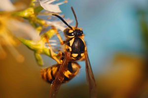 broken arrow bee and pest extermination